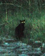blackcat00036 hallow adjt